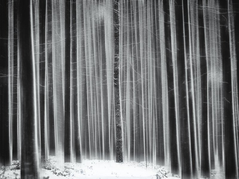 сосновый бор, чб, блюр Штрих-кодphoto preview