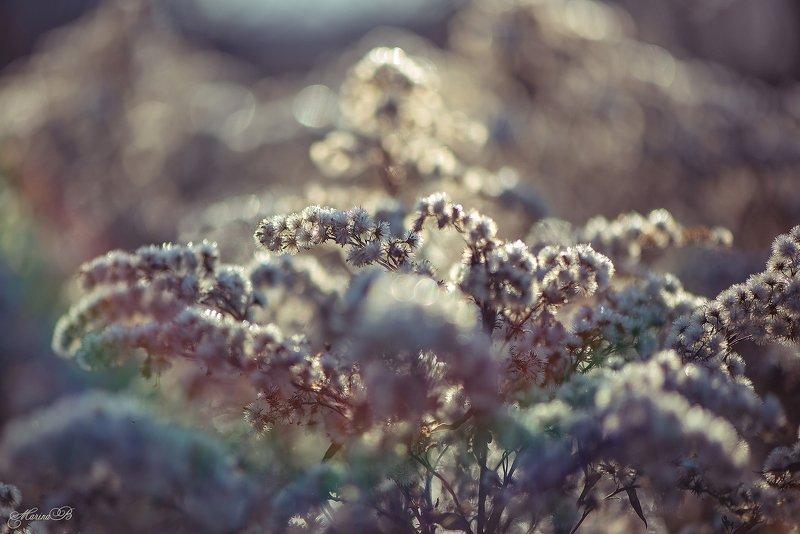 зима, боке, солнце, сухоцветы Зимние цветыphoto preview