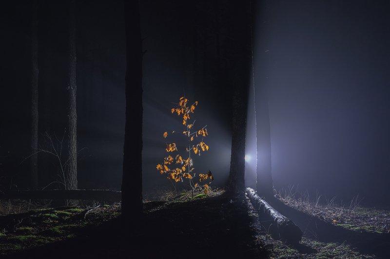 Alone in the darkphoto preview