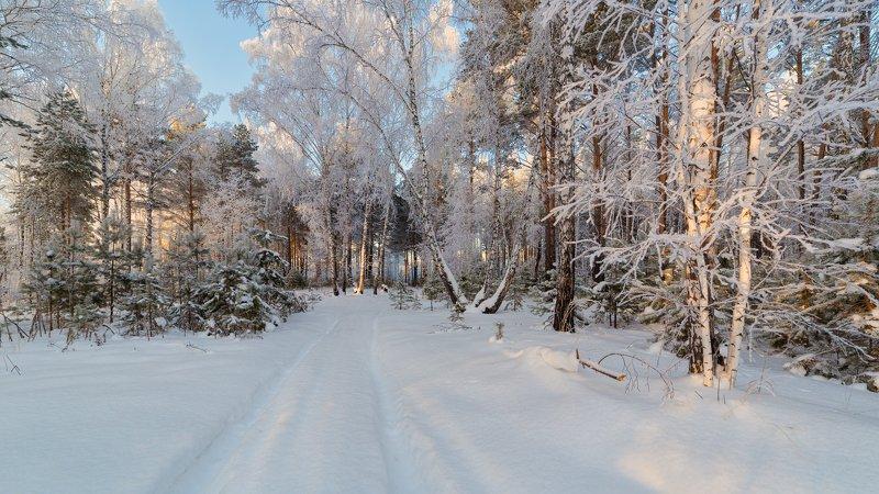 зима, лес, иней, мороз С Наступающим!photo preview