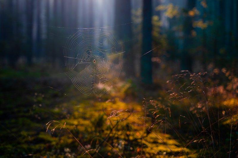 Pajęcza siećphoto preview