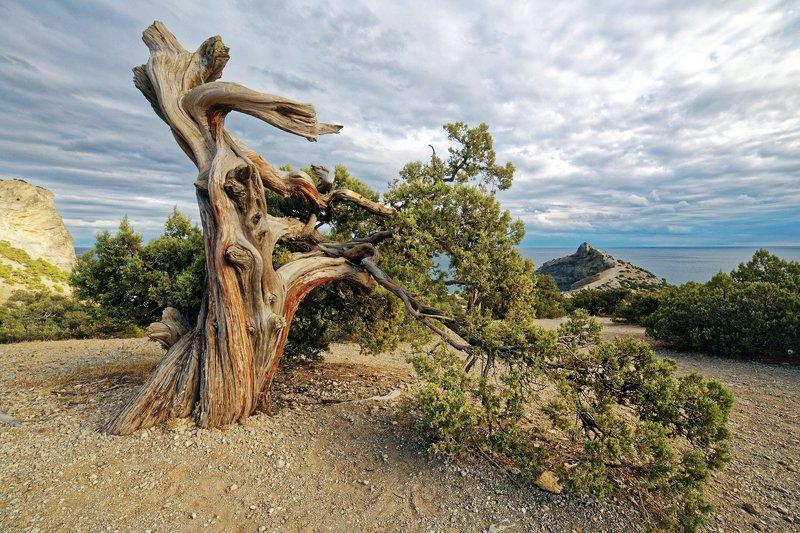 крым, горы, море, сосны, осень Мыс Капчик в октябреphoto preview