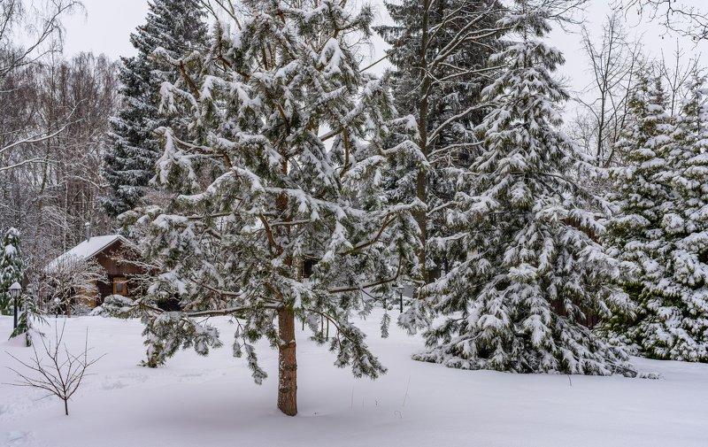 Снежные подмосковные зарисовкиphoto preview
