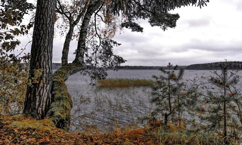 Пасмурный берег.photo preview