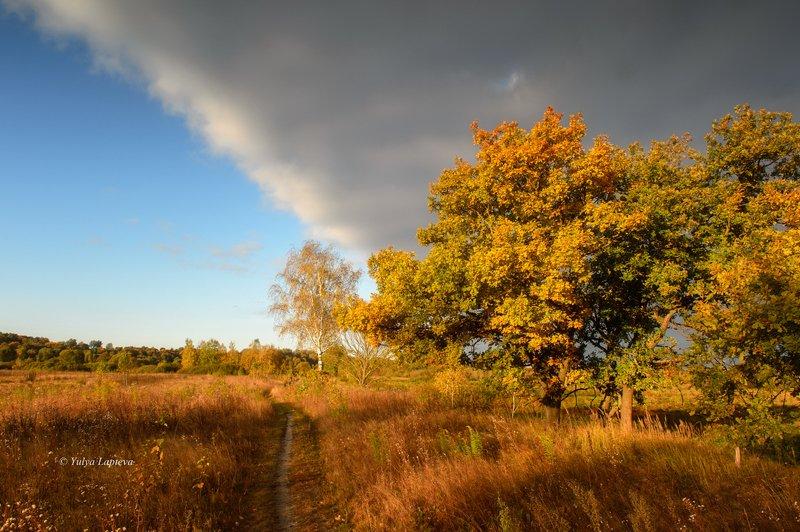 россия,утро,рассвет,брянская область,золотая осень \