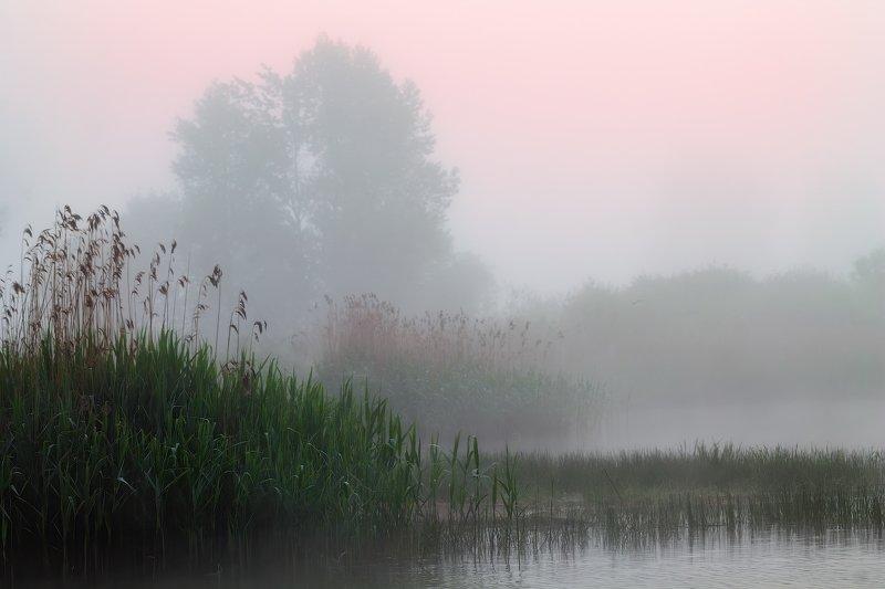 рассвет, туман, река, трава, Тихий рассветphoto preview
