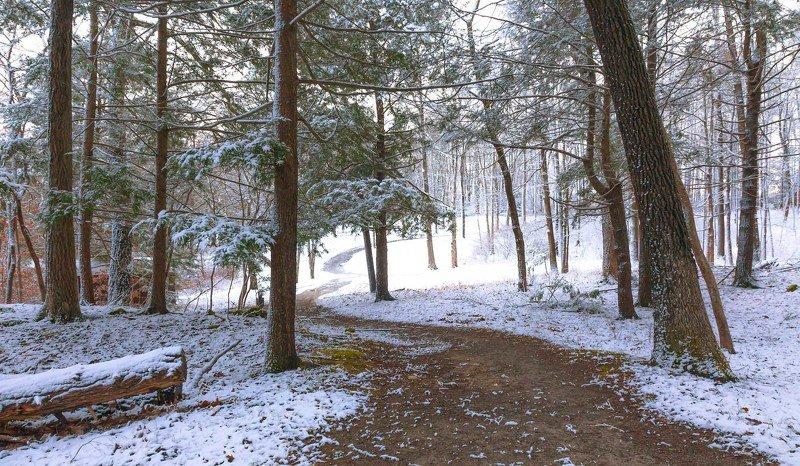 пейзаж,природа,зима,лес,снег,деревья,хвойники, Первый снег.photo preview