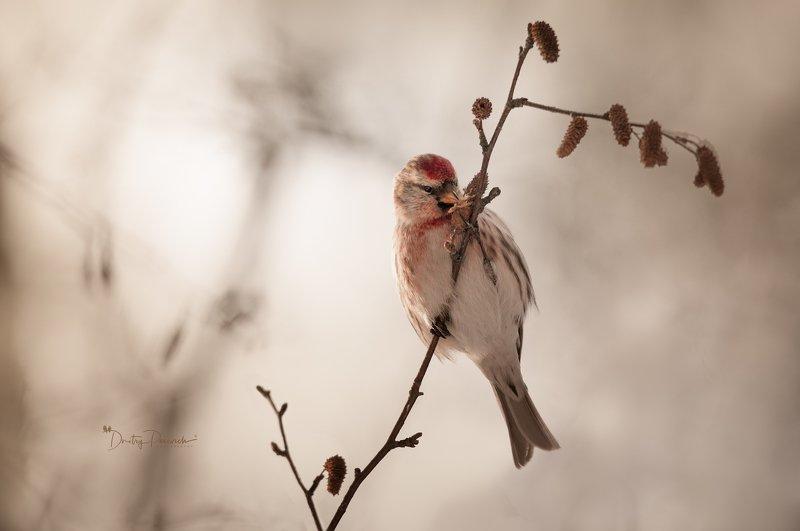 природа, лес, поля, огороды, животные, птицы, макро Зимний завтракphoto preview
