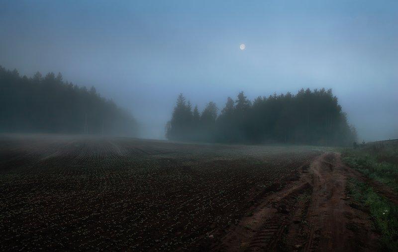 весна, рассвет, поле, туман, До рассвета далекоphoto preview