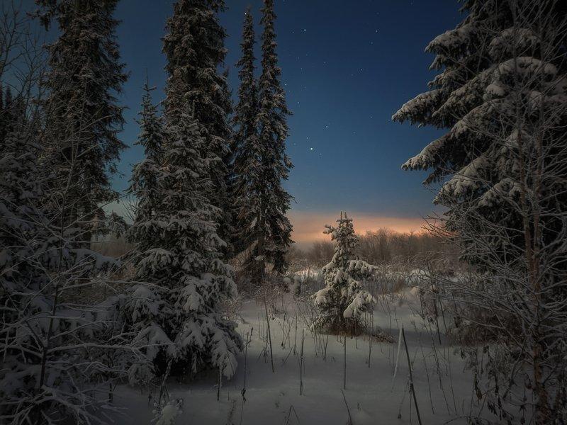 печора,ночь,звезды Ночной лес севераphoto preview