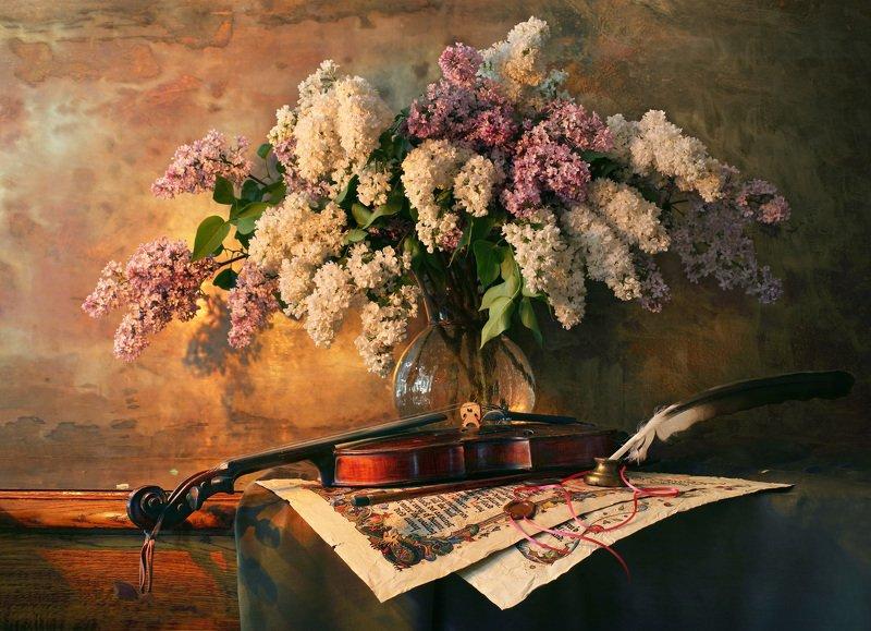 сирень, цветы, скрипка, музыка, музыкальные инструменты, свет Натюрморт со скрипкой и цветамиphoto preview