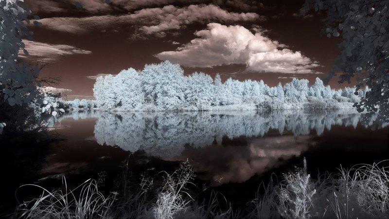 ик -фото, лето, озеро, лес photo preview