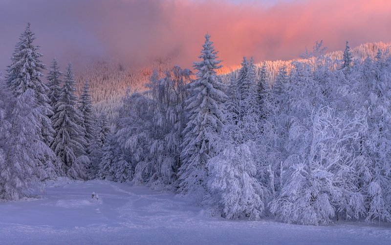 landscape nature scenery forest wood winter evening sunset trees snow colors mountain vitosha bulgaria лес Winter, evening timephoto preview