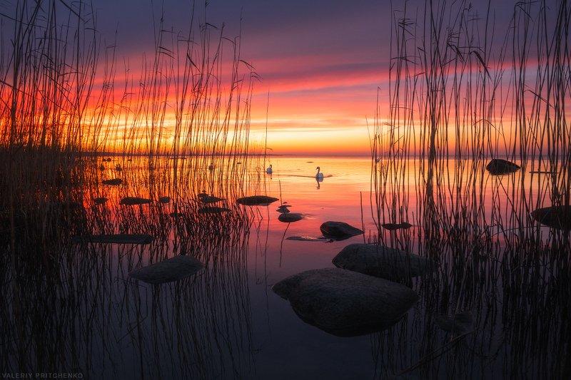 Вечер на берегу Куршского заливаphoto preview