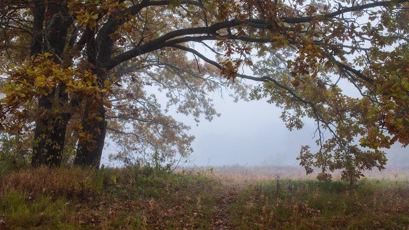 Осенние дубыphoto preview