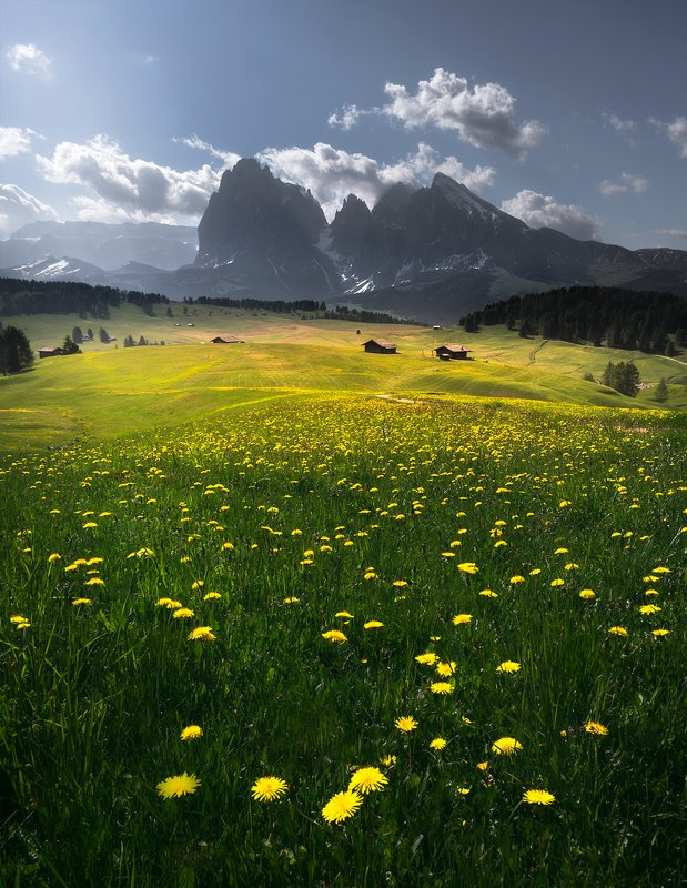 landscape, nature, scenery, travel, outdoor, mountain, peaks, flowers, wildflowers, dandelon, alpedisiusi, italy, dolomites Yellowishphoto preview