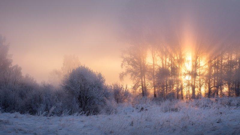 алтайский край, лебединый заказник, советский район, утренний свет, солнечные лучи, морозное утро, туман, зимний пейзаж Пробуждениеphoto preview