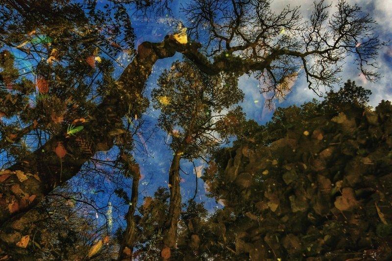 отражение, вода, деревья, листья,синтра, португалия Отражениеphoto preview