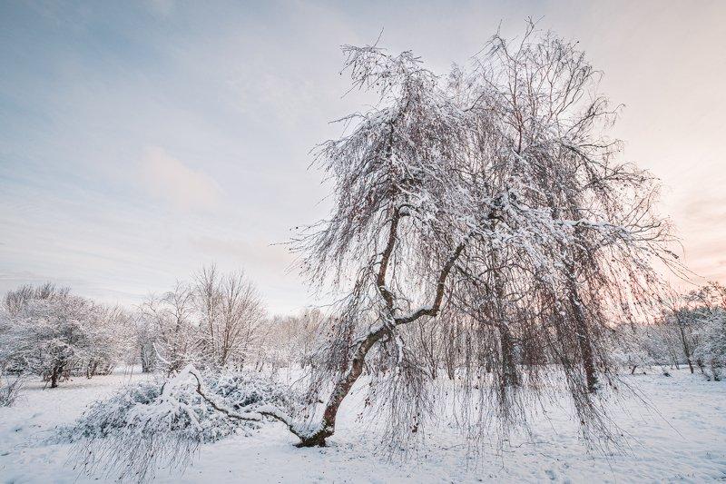 деревья зима снег закат  photo preview