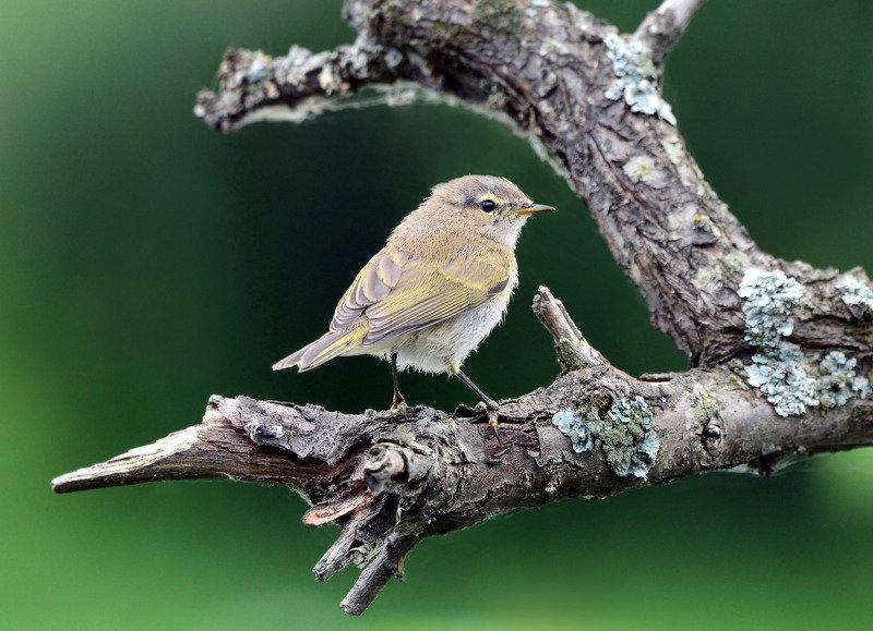 молодая птица. Слёток.photo preview