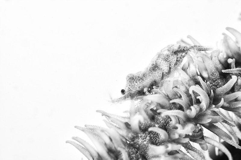 Snowwhitephoto preview
