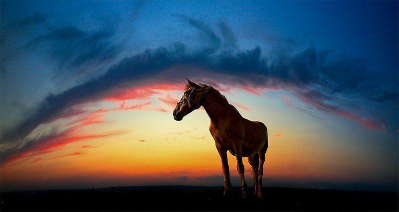 лошадь, небо, дуга «Ожидание»...photo preview