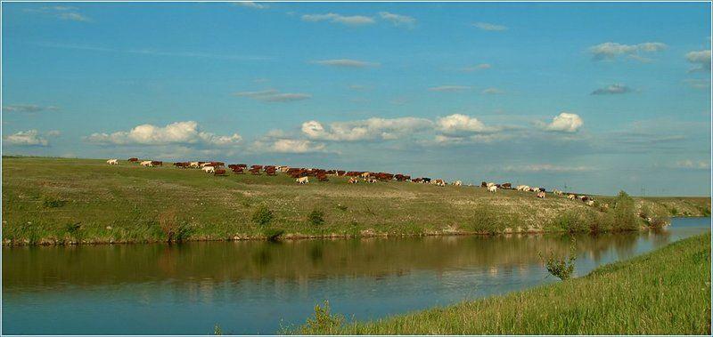 коровы, буренки, озеро, пейзаж Летняя благодатьphoto preview
