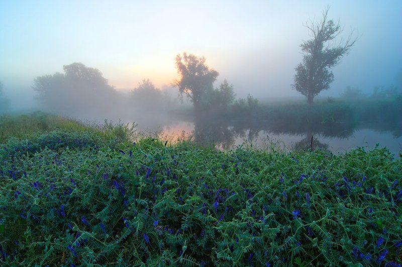 речка , цветы , туман , рассвет начало дня - 2photo preview