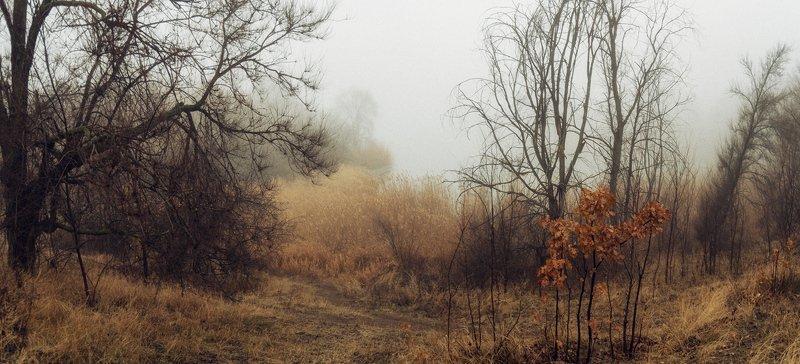 В туманное Рождествоphoto preview