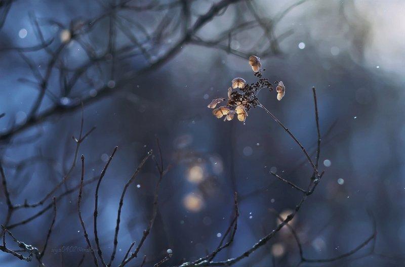 макро, зима Зимний танец...photo preview