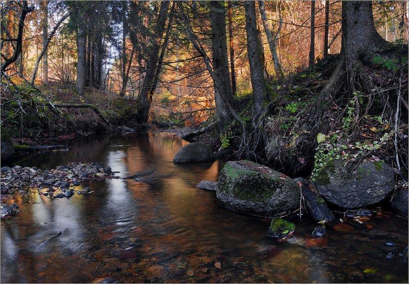 беларусь ноябрь ручей осень ***photo preview