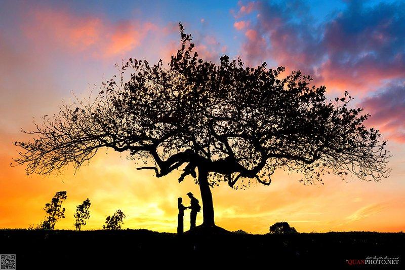 quanphoto, landscape, sunset, sundown, twilight, tree, rural, countryside, love, vietnam Rural Sunsetphoto preview