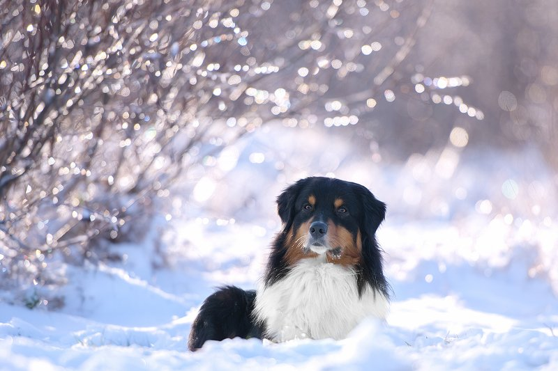 nikon зимняя сказкаphoto preview