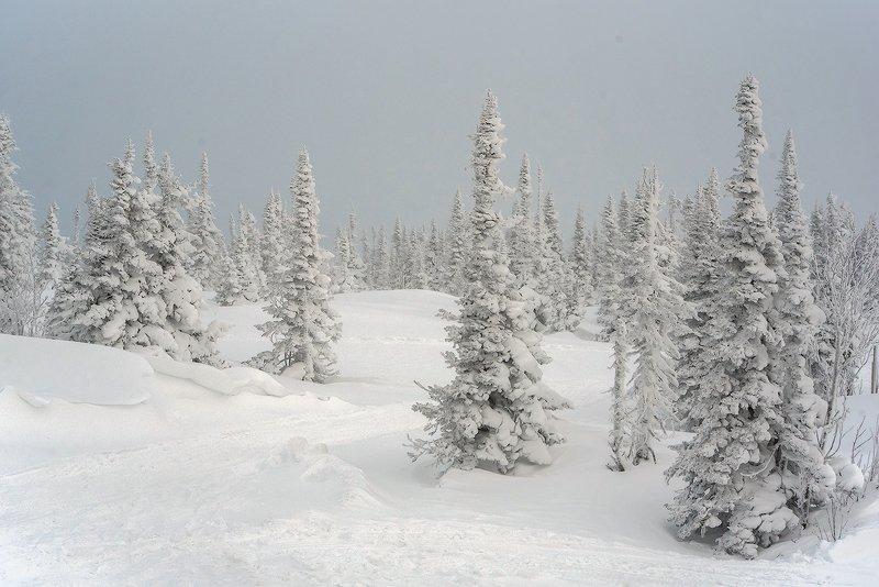 снег, иней, мороз, зима, пихты, гора зелёная, шерегеш, горная шория, сибирь Pro метельные пейзажи горы Зелёнойphoto preview
