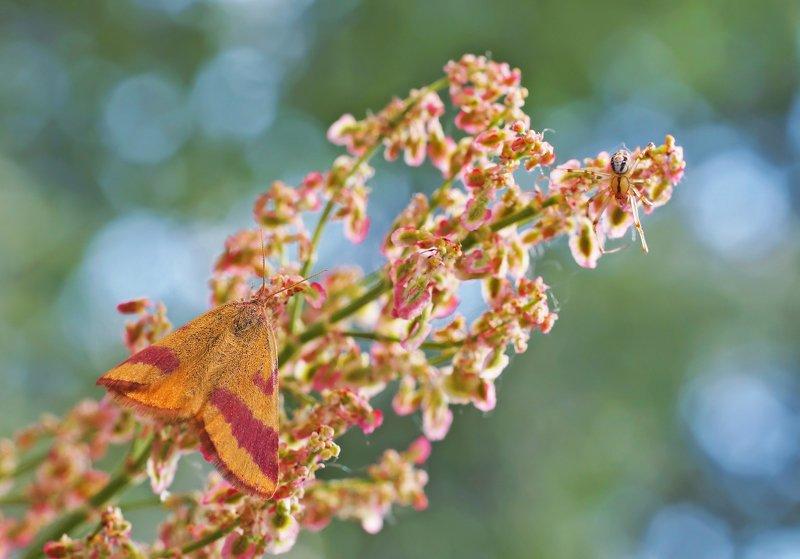 Бабочка, растение,паук ***photo preview