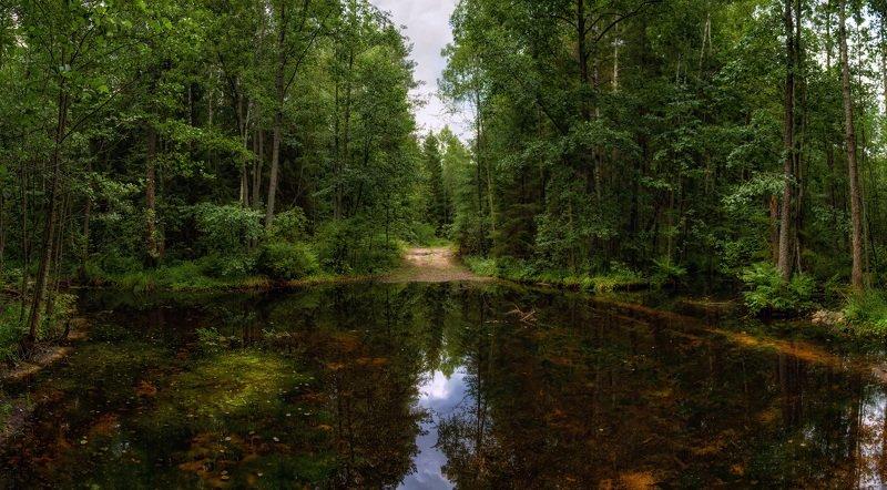лето, лес, дорога, панорама, В лесу после дождяphoto preview