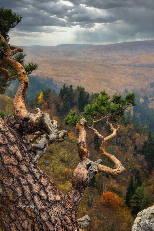 пейзаж сосна плато лагонаки Под буйными ветрамиphoto preview