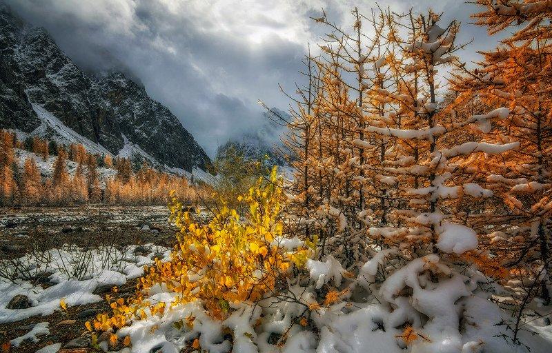 горный алтай,осень,долина актру,лиственницы,снег,карликовая берёзка Осенний солнца луч...photo preview