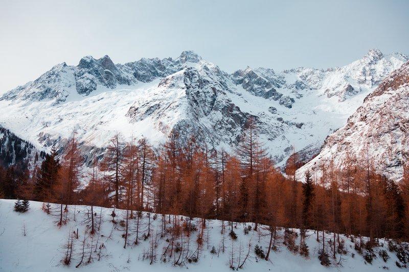 лес, горы, альпы, снег, рыжий, швейцария, *Red*photo preview