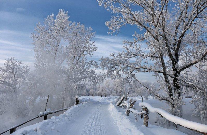 Зимние прогулкиphoto preview