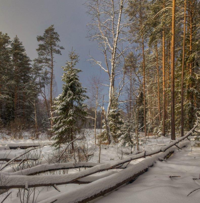 январь лес снег свет суходол Зимаphoto preview