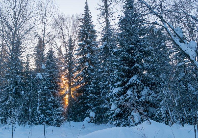 мороз, рассвет, елки Рассвет -40 фото превью