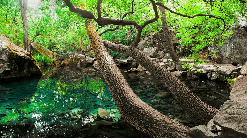 пруд, воронцовский, парк, вода, отражение, чистота, прозрачность, воздух, свет, зеленый Тишинаphoto preview