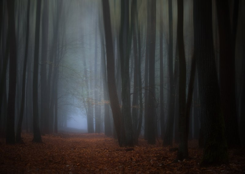 forest trail...photo preview