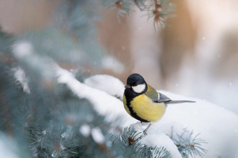 природа, лес, поля, огороды, животные, птицы, макро А про нас вы не забыли ?photo preview