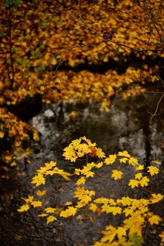 Осенняя рекаphoto preview