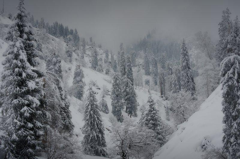 в сумрачных горахphoto preview
