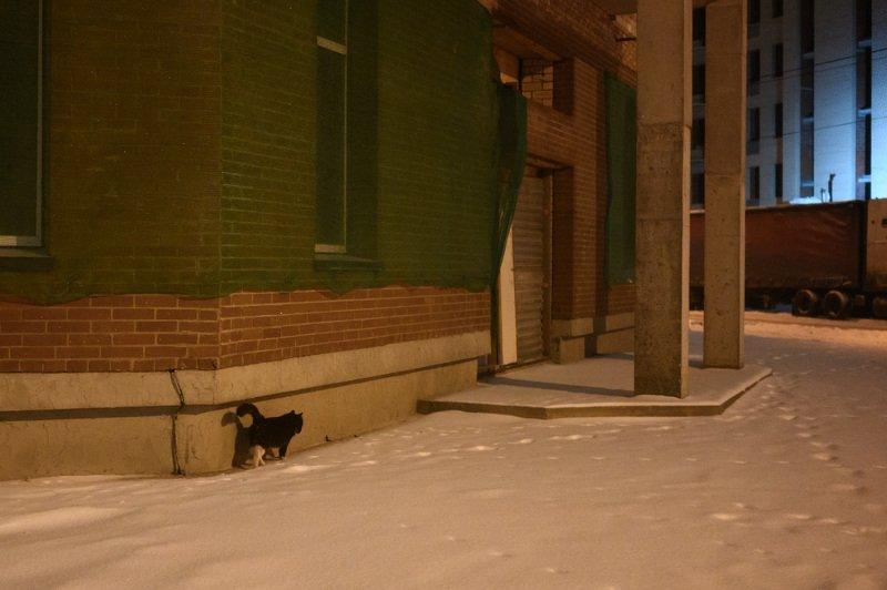уличная фотография, ночь, северодвинск, В районе новостроекphoto preview
