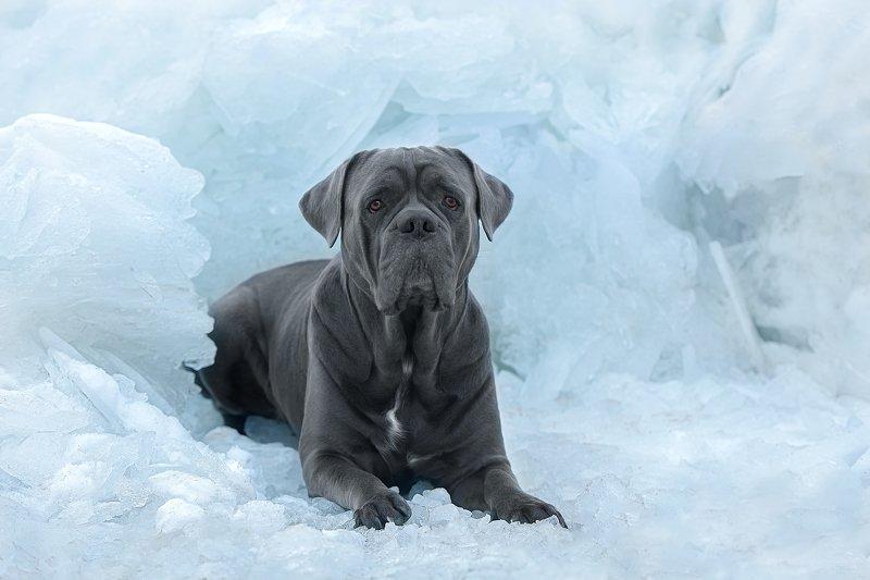 nikon во льдах..photo preview