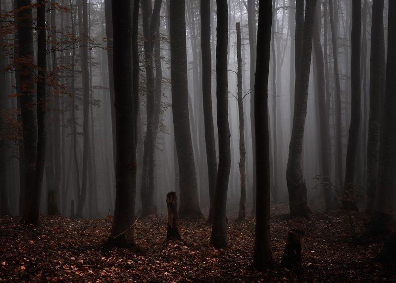 В лесной чащеphoto preview
